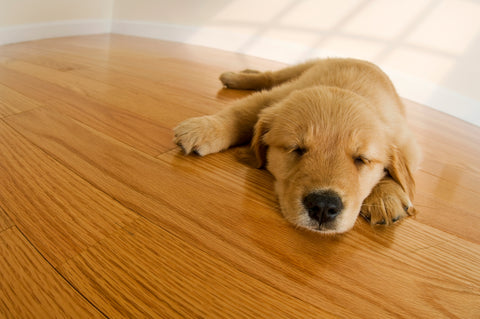 AvidPro Custom Hardwood Floors - Bend and Portland, OR - refinishing services for nail marks from golden retriever puppy