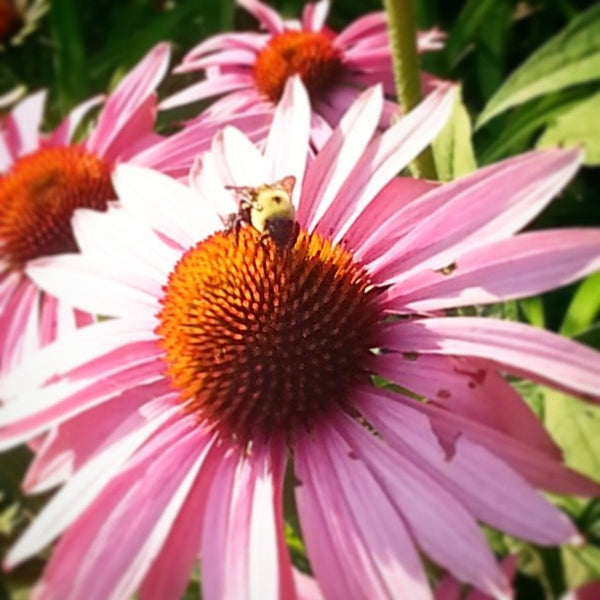 busy bee flower