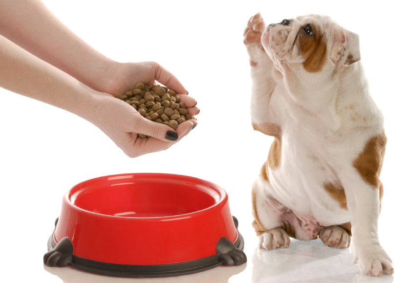 Chow down: How to pick the best food for your dog