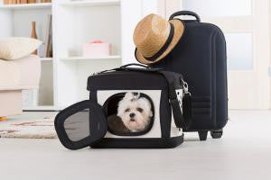 Tips for traveling with your pet: By plane, train and automobiles
