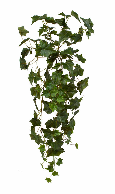 English Ivy Hanging: Green