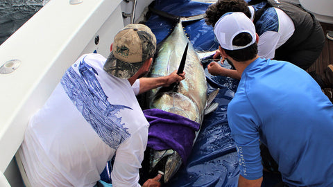 Electronic Tagging Pacific Bluefin Tuna off San Clemente Island