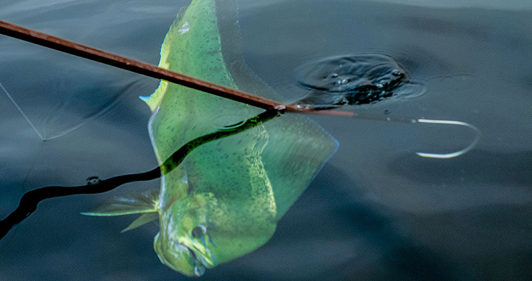 How to Gaff a Fish - Read More