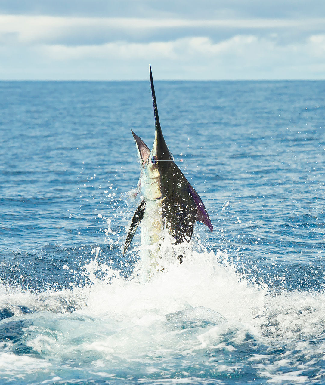 Marlin Jumping Out Of The Water | Los Sueños Costa Rica - AFTCO's Any Fish, Any Water