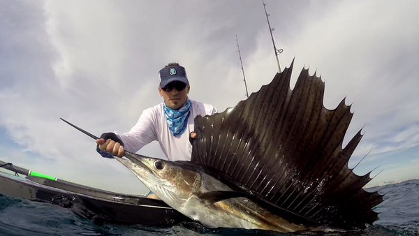 Sailfish Pictures