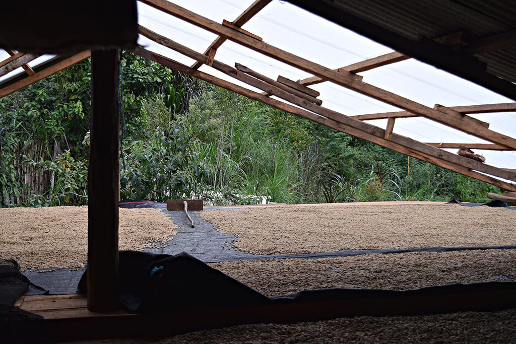 Cafe Femenino Peru - Coffee Drying