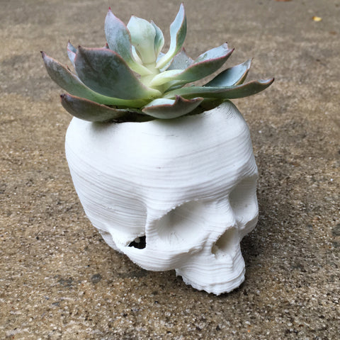 3D Printed - Skull Planter/Ring Catcher