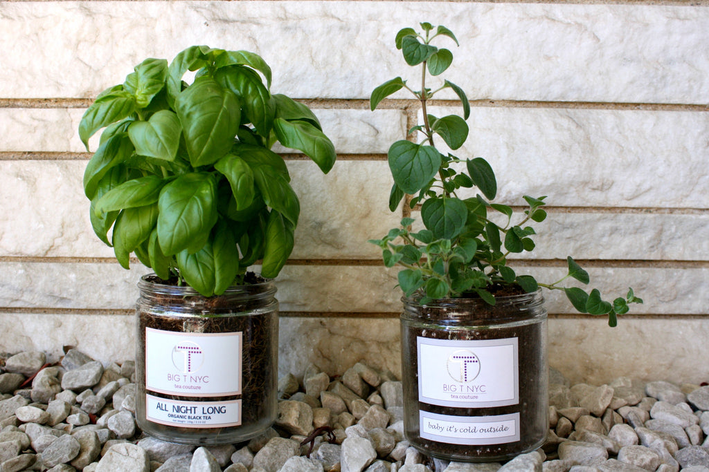 DIY: Tips to Reuse your Big T NYC Glass Jars