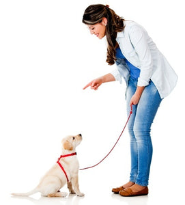 DOG TRAINING TIPS #34