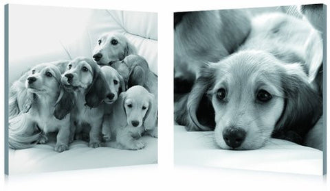 Puppies Love, Gallery Wrapped Diptychs 2 Panel Modern Wall Art Decoration