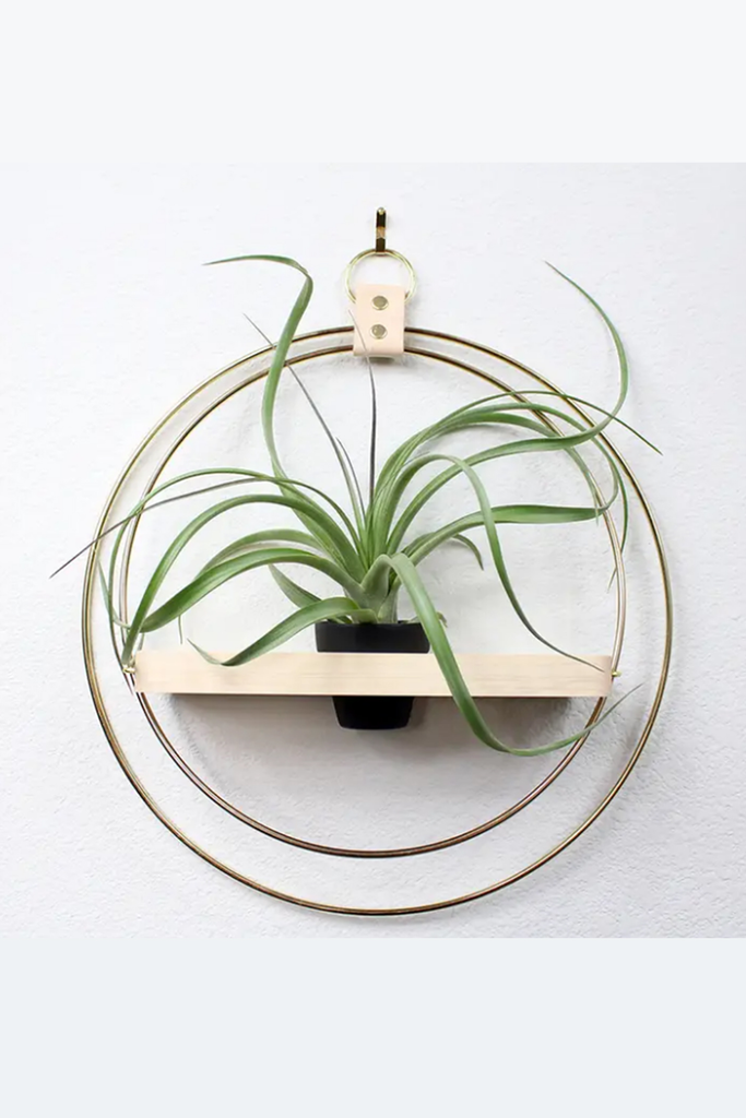 plant hanger & shelf