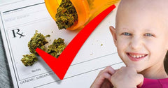 Finally, Big Pharma Admits Cannabis Kills Cancer Cells
