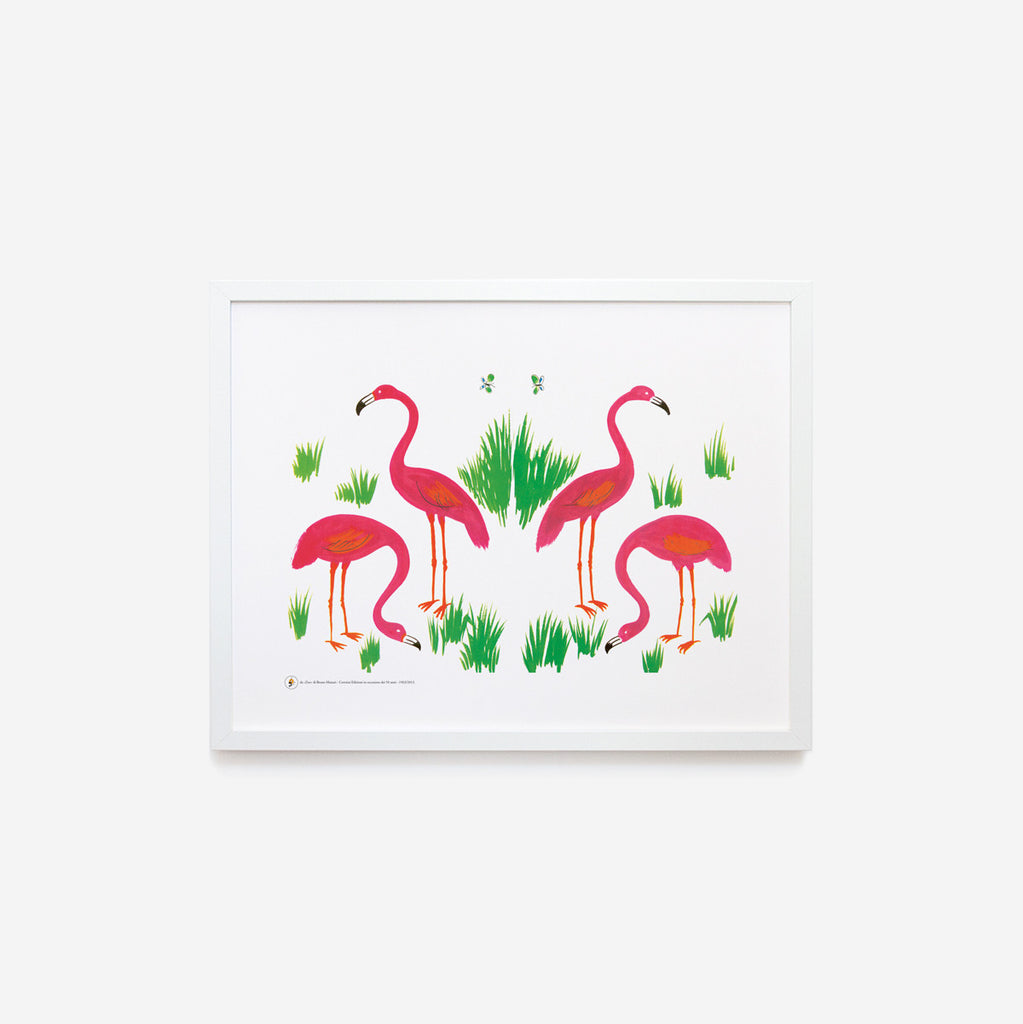 Zoo | Flamingos