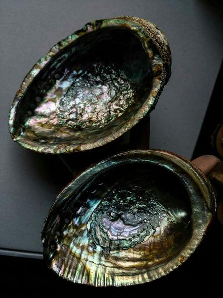 Natural Abalone Shells
