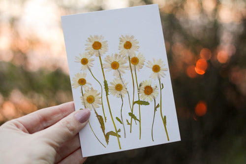 Daisy - Pressed flower collection card