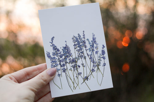Blue Sage Salvia - Pressed flower collection card