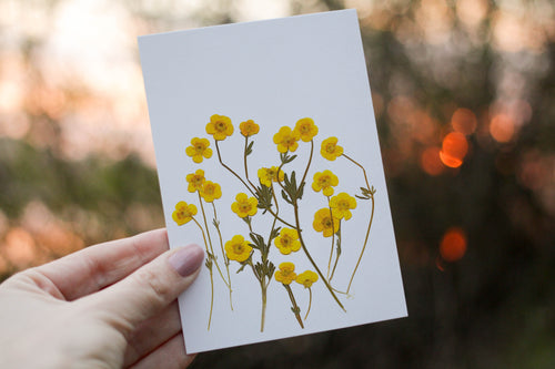 Wild Buttercup - Pressed flower collection card
