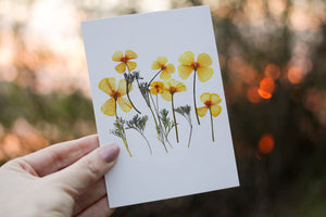 California Poppy - Pressed flower collection card