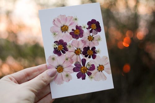 Pink Cosmos - Pressed flower collection card