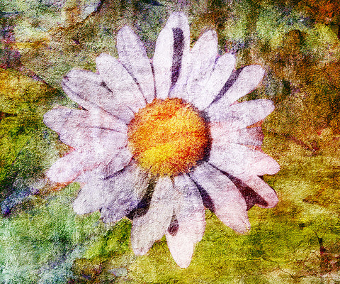 Birthday Blossoms Wall Art - Daisy