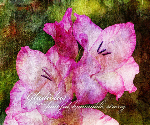 Birthday Blossoms Wall Art - Gladiolus, with characteristic description