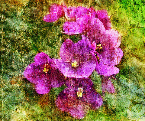 Birthday Blossoms Wall Art - Violet