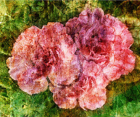 Birthday Blossoms Wall Art - Carnation