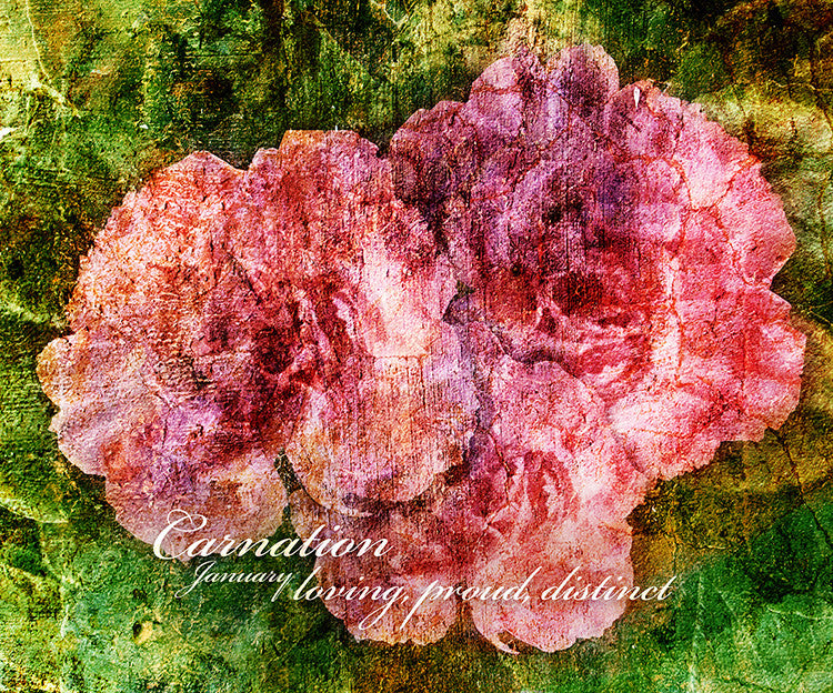 Birthday Blossoms Wall Art - Carnation, with characteristic description