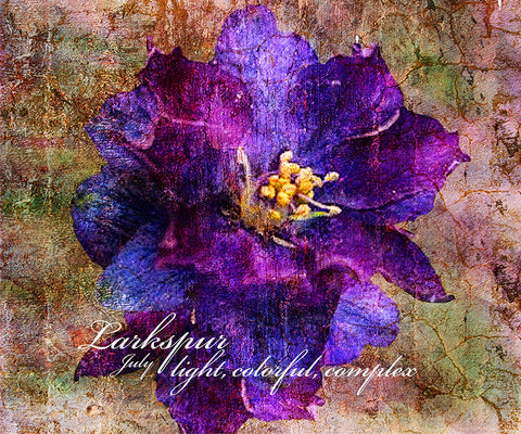 Birthday Blossoms Wall Art - Larkspur, with characteristic description