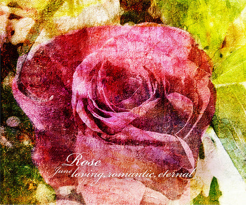 Birthday Blossoms Wall Art - Rose, with characteristic description