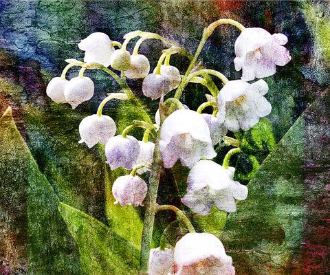 Birthday Blossoms Wall Art - Lilly of the Valley