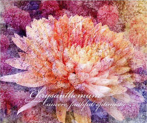 Birthday Blossoms Wall Art - Chrysanthemum, with characteristic description