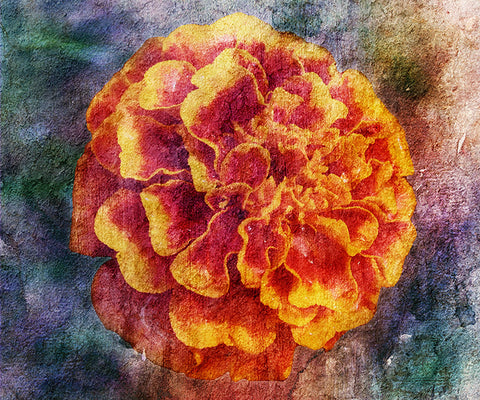 Birthday Blossoms Wall Art - Marigold