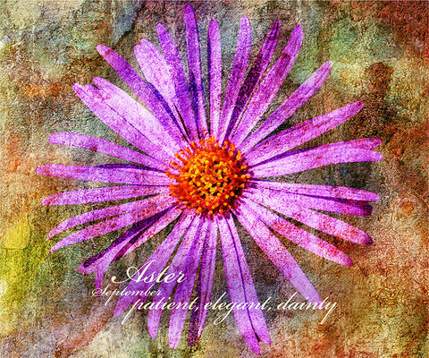 Birthday Blossoms Wall Art - Aster, with characteristic description