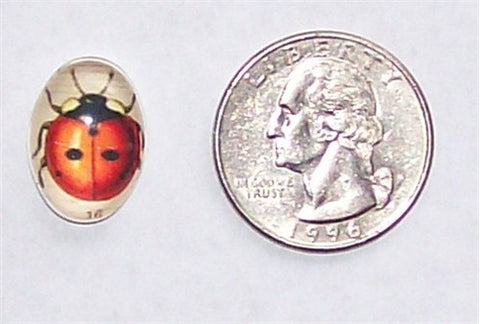 18x13mm  Lady Bug Glass Cabochon 289x
