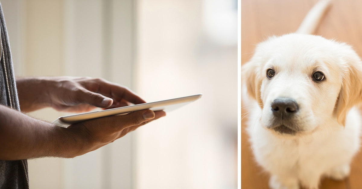 Get Ready for Your Home's New Best Friend