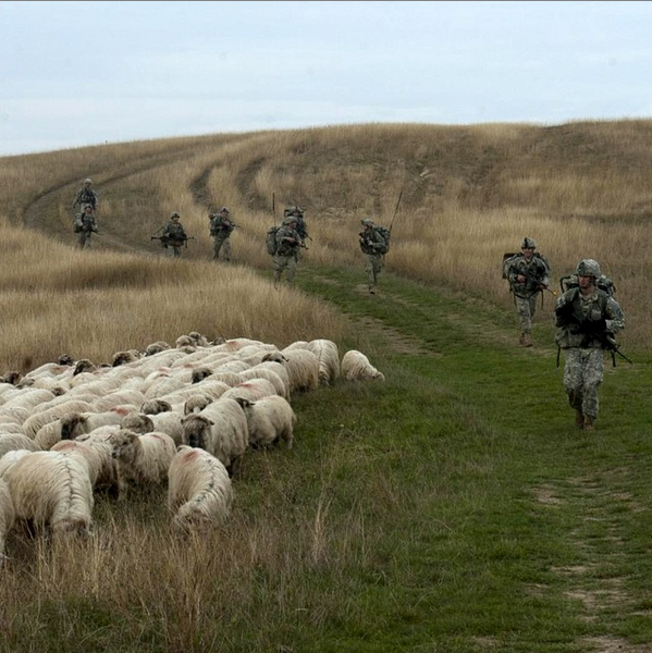 US Army paratroopers from 1st Squadron, 91st Cavalry Regiment, 173rd Airborne Brigade, test boot sole traction on sheep shit during an emergency deployment readiness exercise in Transylvania, Romania.