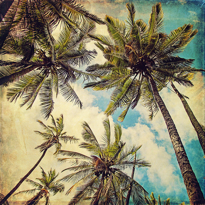 Kauai Island Palms | Fine Art Photography Print