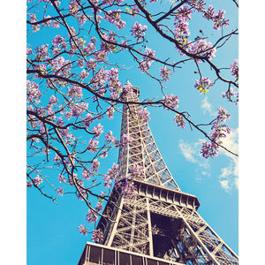 Springtime in Paris | Eiffel Tower Blossoms Photograph