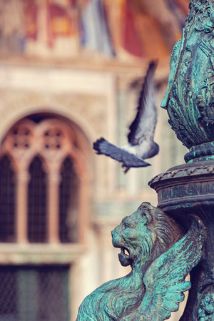 Wings At Piazza San Marco - Venice, Italy