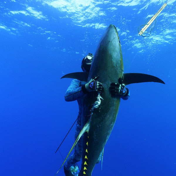Spearfishing Ascension's Monster Tunas