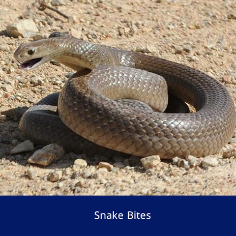 Snake Bites Safety Talk