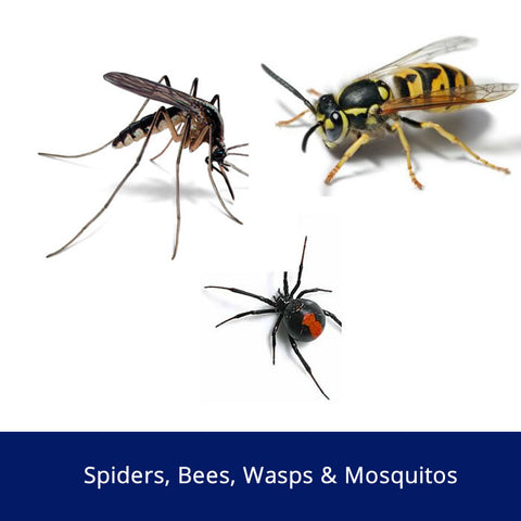 Spiders, Bee, Wasps and Mosquitos Safety Talk