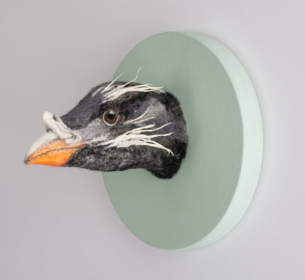 Portrait of a Rhinoceros Auklet