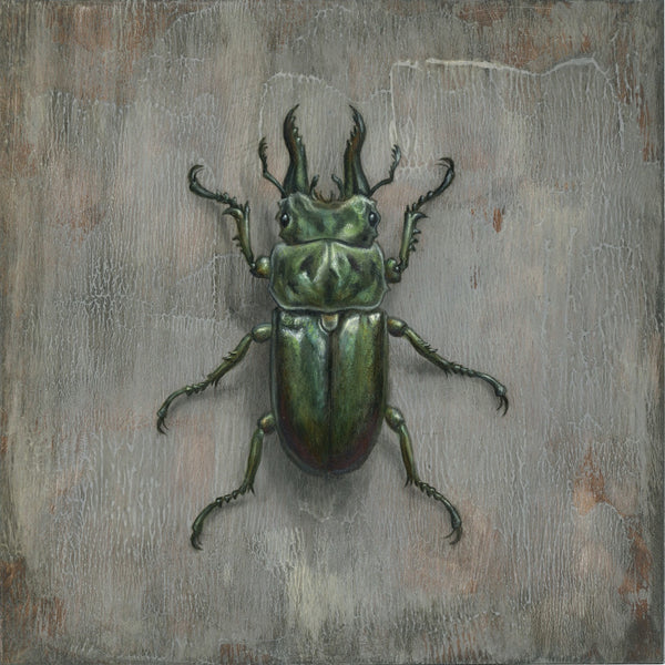 Beetle on Slate