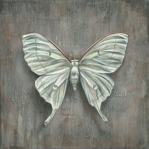 Luna Moth on Slate