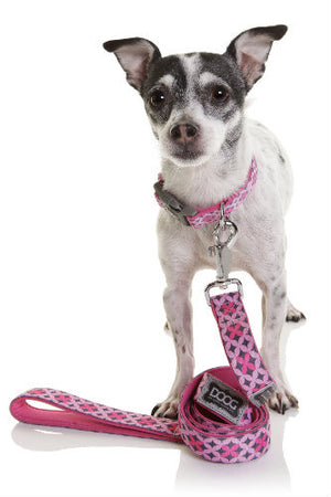 How to fit your pet for Collars or Clothing