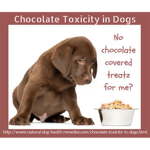 Why is chocolate toxic for pets?