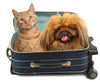 Luxury Pet Friendly Accommodation