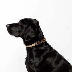 Mog and Bone Leather and Brass Rope Dog Collar
